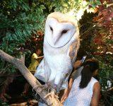 宮島観光のモデルコースにおすすめ!フクロウとひょう猫の森